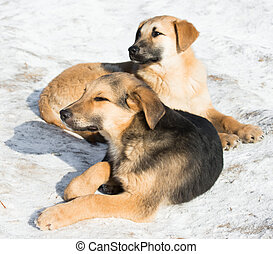 wenig, junger hund, in, der, schnee
