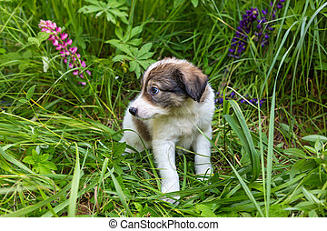 wenig, junger hund, sitzen, in, gras