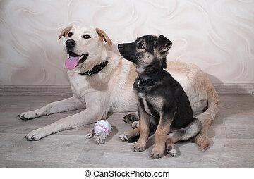 wenig, junger hund, und, hund, lies, auf, boden