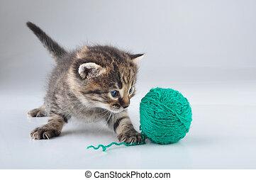 wenig, kã¤tzchen, spielende , mit, a, woolball