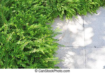 wenig, pflanze, in, kleingarten