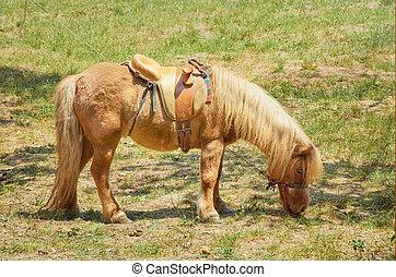 wenig, pony, rotes