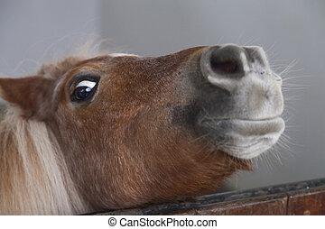 wenig, pony, traurige