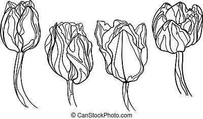 wenig, satz, kunst, flower., tulpen, vier, linie