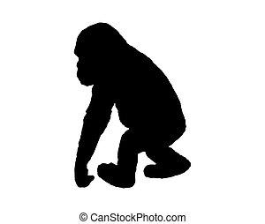 wenig, schimpanse
