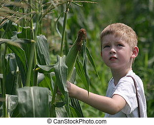A boy in a corn field looks to the sky.