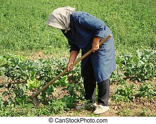 werken, landbouwkundig