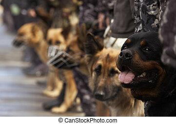 werkende honden