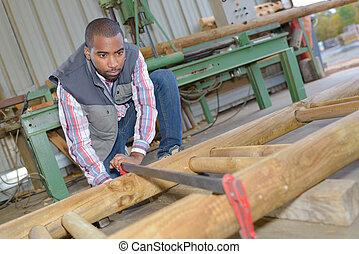 werkende , houtzagerij, man