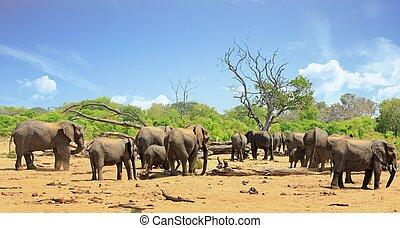 werkende, olifanten, landschap, kudde, waterhole, aanzicht