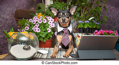 werkende , velden, draagbare computer, dog, tegen, achtergrond, bureau, vastknopen, bloeiend, vrolijke