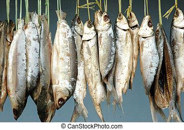 wesen, prozess, trocknen, milkfish, gehangen