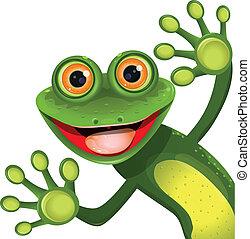 wesoły, zielona żaba