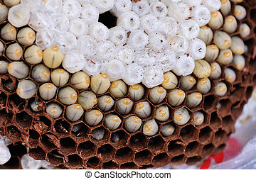 wespen nest nest wespen zellen bild. Black Bedroom Furniture Sets. Home Design Ideas