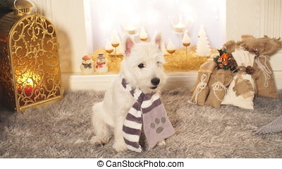 West highland white terrier dog sitting by the fireplace on...