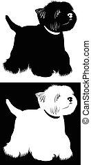 West Highland White Terrier. Dogs West Highland White...