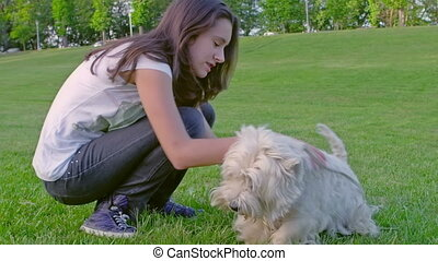 West Highland White Terrier playing - Teenage girl playing...