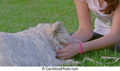 Teenage girl playing with West Highland White Terrier on a green meadow.