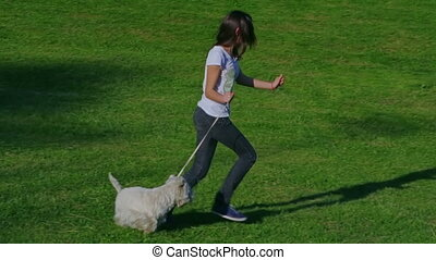 West Highland White Terrier running - Girl running with West...