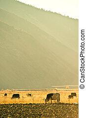 Western China, Highlands Ranch