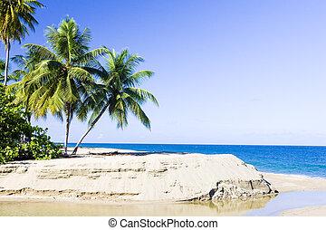 Western coast of Tobago