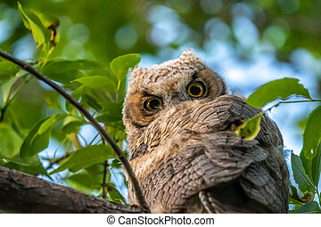 A small owl native in Northern America sitting on top of a tree
