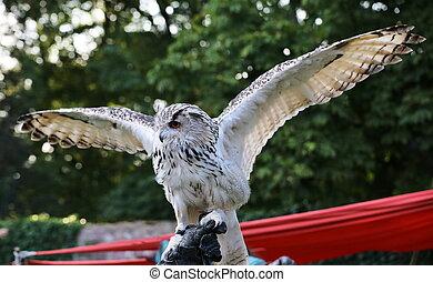 Western Siberian eagle-owl (Bubo bubo sibiricus) is ...