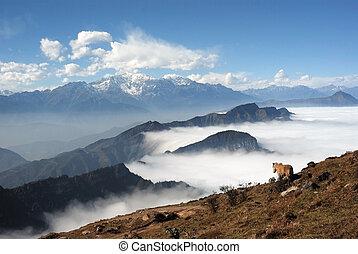 Western Sichuan, China, Cattle Mountain cloud falls