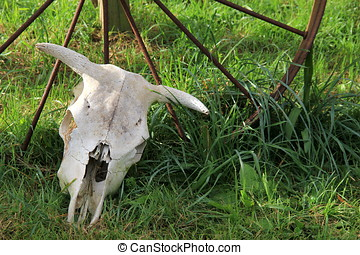 Western wheel on grassy lawn with white-washed steer skull standing against it.