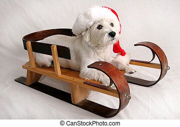 Westie Claus - White West Highland Terrier dress in Santa...