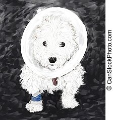 Westie in a cone - West Highland White Terrier, that has had...