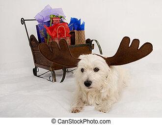 Westie Reindeer delivery