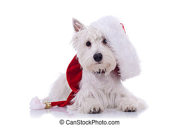 westie santa - White puppy dresed in santa claus costume oer...