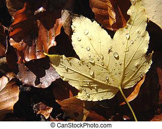 wet autumn leaf