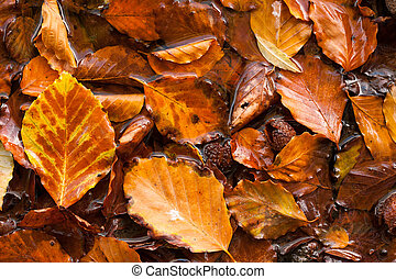 wet autumn leaves background