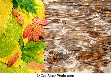 Wet autumn leaves on wooden background