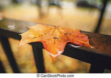 wet autumn maple leaf on handrail