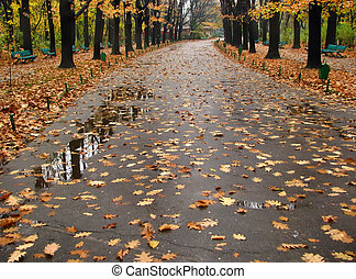 Wet autumn scenery