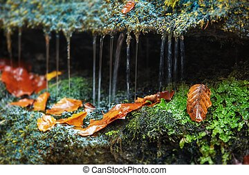 wet autumn - still life