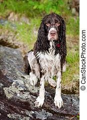 wet bedragled dog sitting on a rock