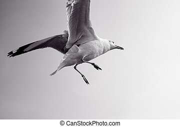 Wet bird flying in sky.