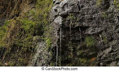 Wet cliff face. Two shots.