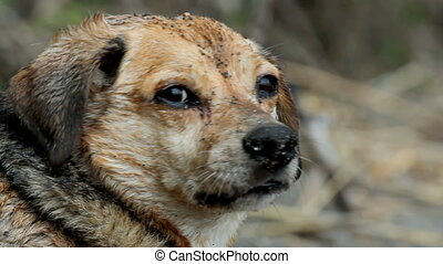 wet dog closeup - wet mixed breed dog at the beach