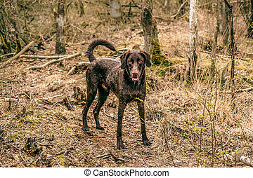 Wet dog in the forest