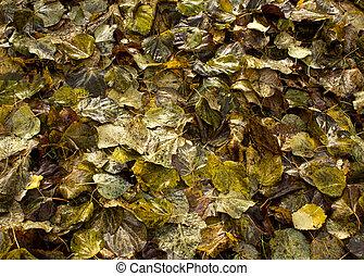 Wet fallen leaves.