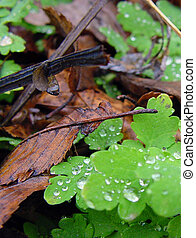 Forest floor with dead leaves and water drops