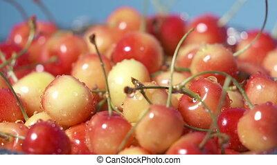Wet fresh sweet cherries in colander after washing