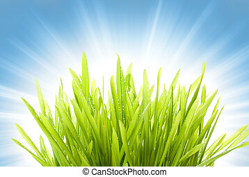 Wet grass over abstract blue background