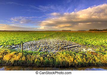 Wet grassland landscape with dark morning clouds