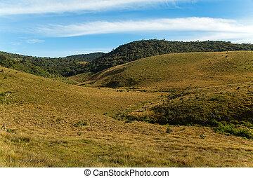 Wet grasslands & Sub-Montane and Montane forest Horton...